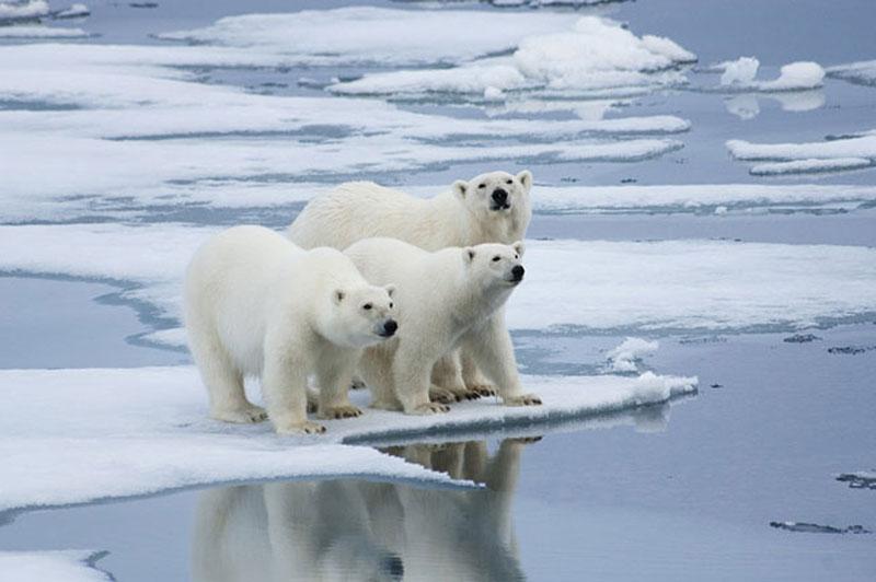 O que é efeito estufa? Entenda as causas e consequências do aquecimento global como eu entendi