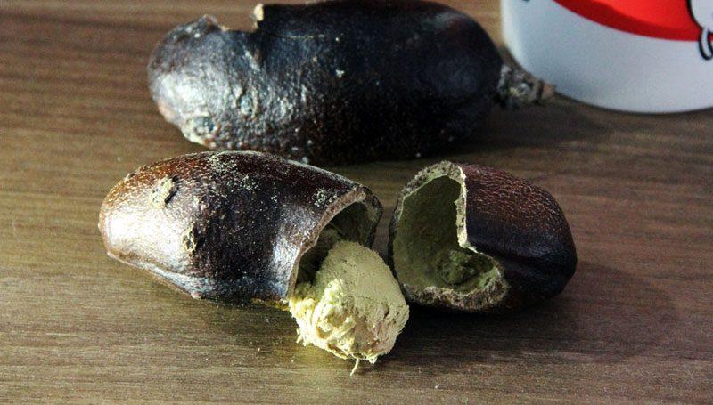 O místico jatobá é uma delícia que gruda na boca